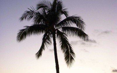 Oahu Palm Tree at Sunset