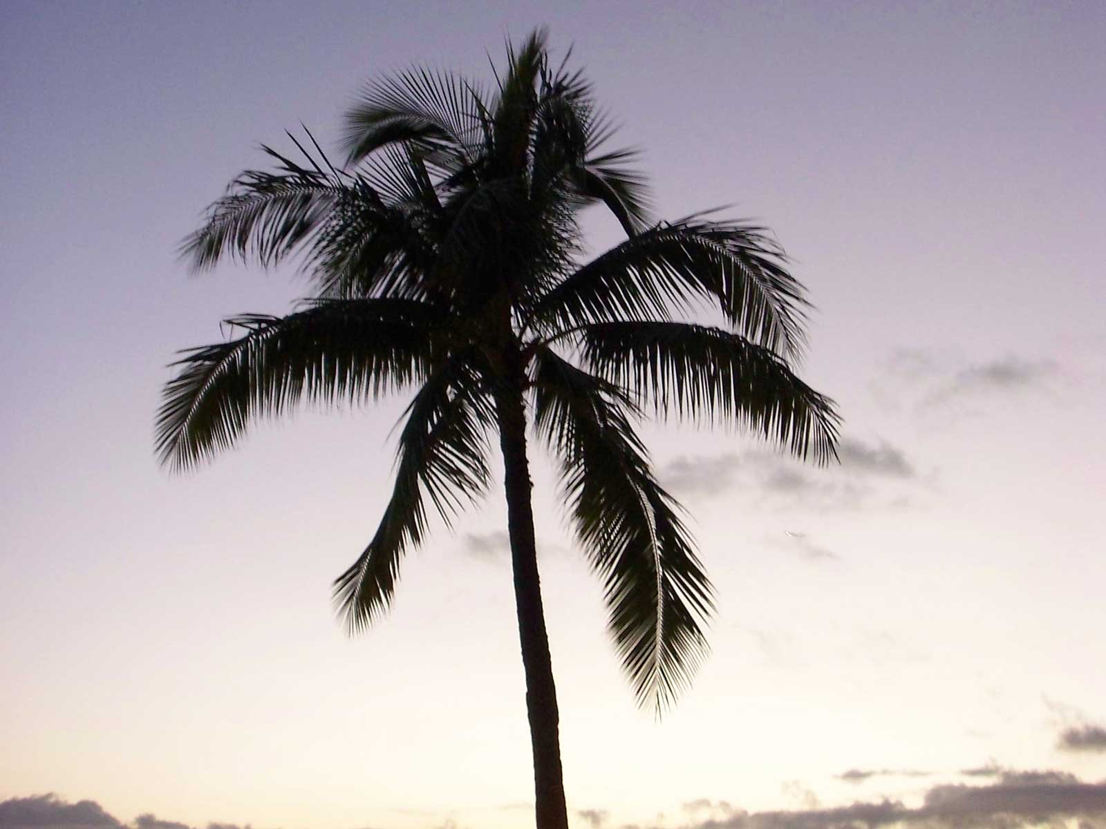 Single palm tree pictures - images of happy new year wishes for husband