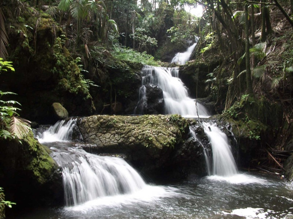 Onomea Tropical Waterfall