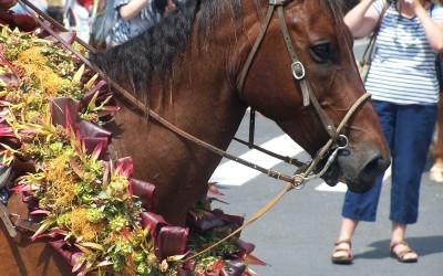 Paniolo Horse