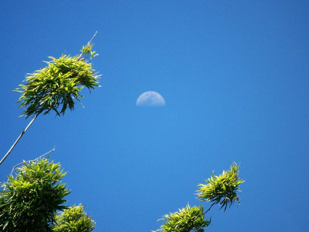 Bamboo Moon in Hawaii