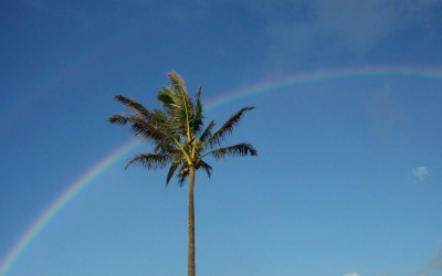 Palm Tree Rainbow