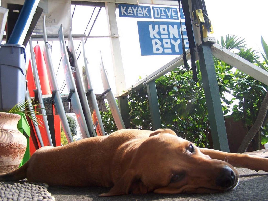 Surf Shop Dog