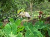 Traditional Hawaiian Village, Iao Valley State Monument