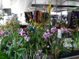 Hilo Farmers Market Flowers