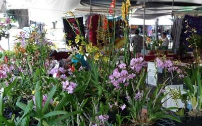 Hilo Farmers Market Flowers