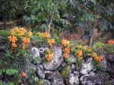 orange-hawaii-flowers