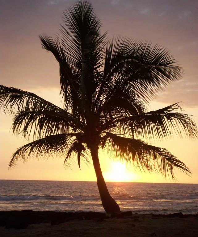 Palmed Sunset