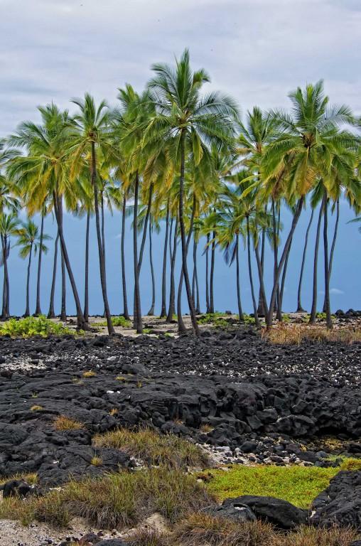 Honaunau Palm Tree Stand