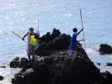 Hawaii A&#039;ama Crab Hunting