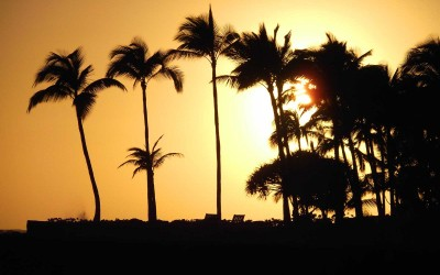 Hawaii Sunset Palms