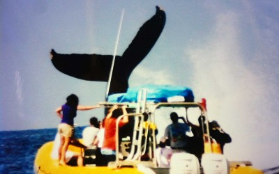 Humpback Whale Tail with Boat