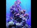 Maui Aquarium Coral