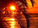 Hawaii Palm Tree Sunset