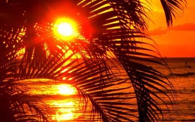 Hawaii Palm Tree Sunset