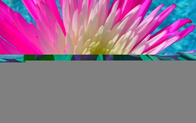 Pink Flower Kauai