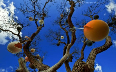 Seaside Dream Buoys in Tree