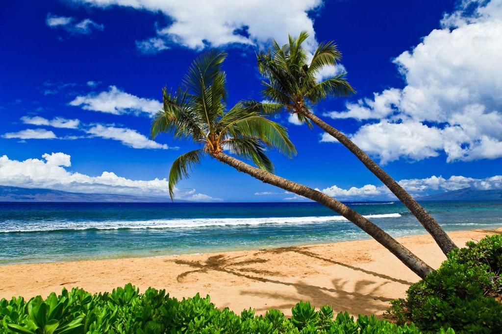 Ka'anapali Beach Palms