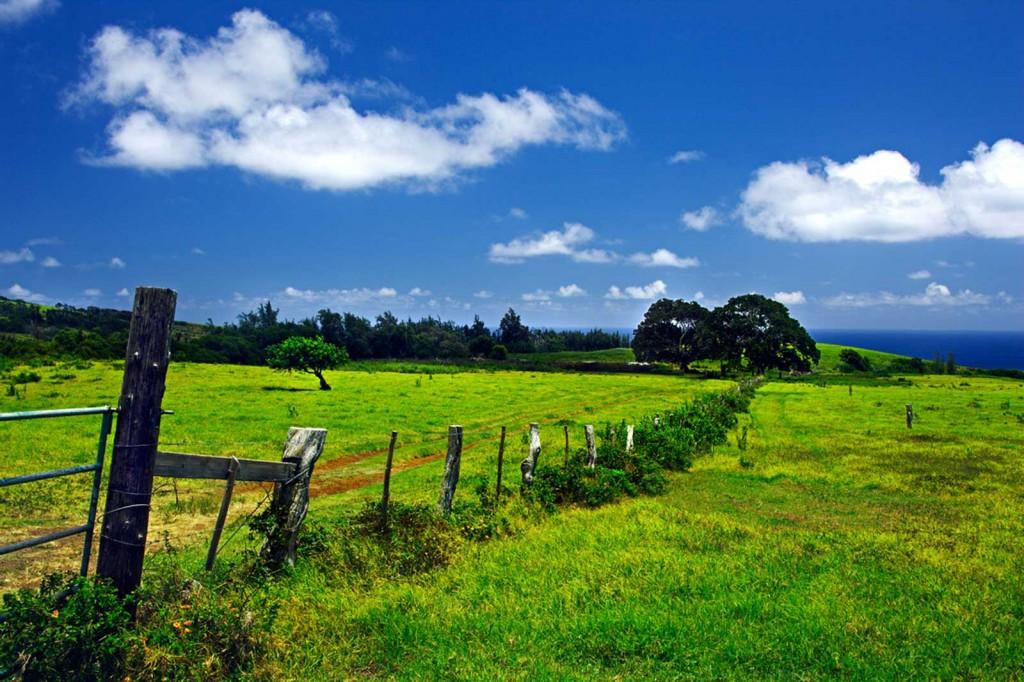 Molokai East Side Fields