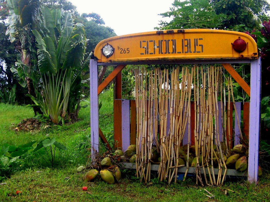 Coconut Glen's Coconut Stand