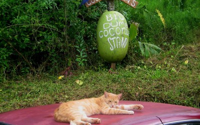 Coconut Stand Cat