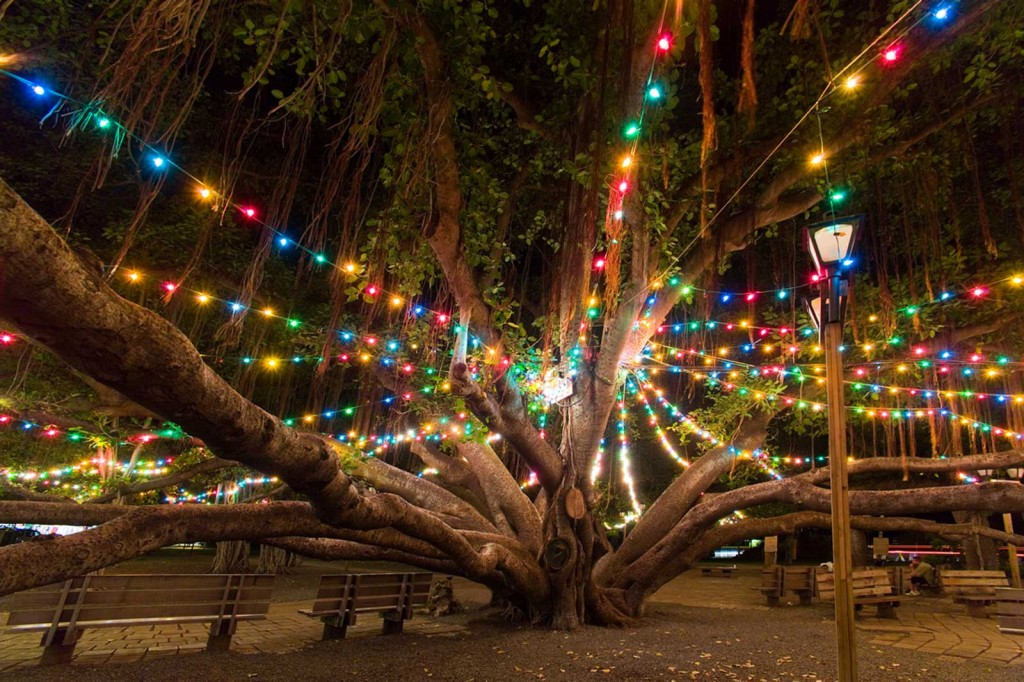 Lahaina Banyan Tree at Christmas