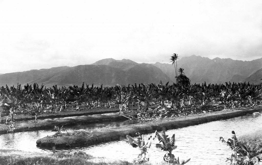 Waikiki Banana Plantation