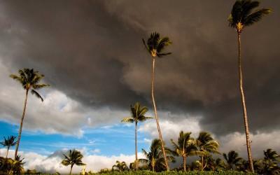 Lahaina Maui Palms, Dark Clouds