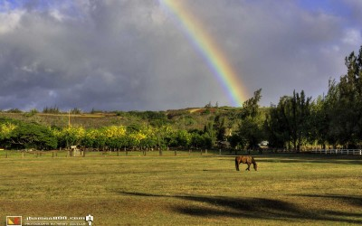Hawaii Kawailoa Ranch Rainbow