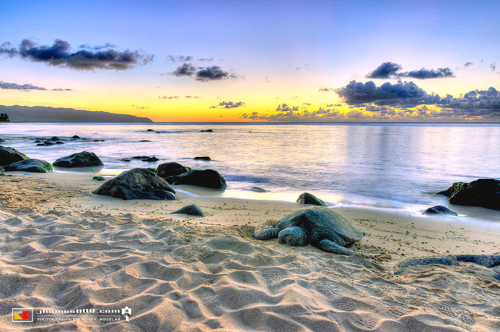 Laniakea Beach Honu - Hawaii Pictures
