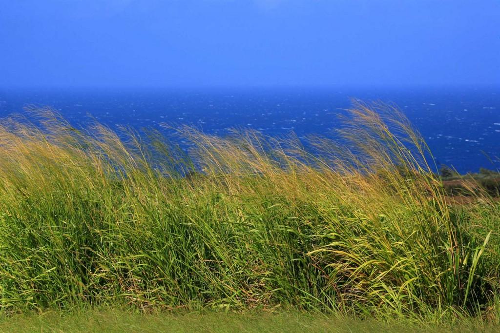 Maui Sea Breeze