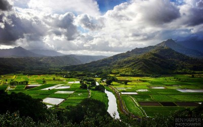 Kauai Kalo Fields