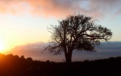 Kula Maui Sunset