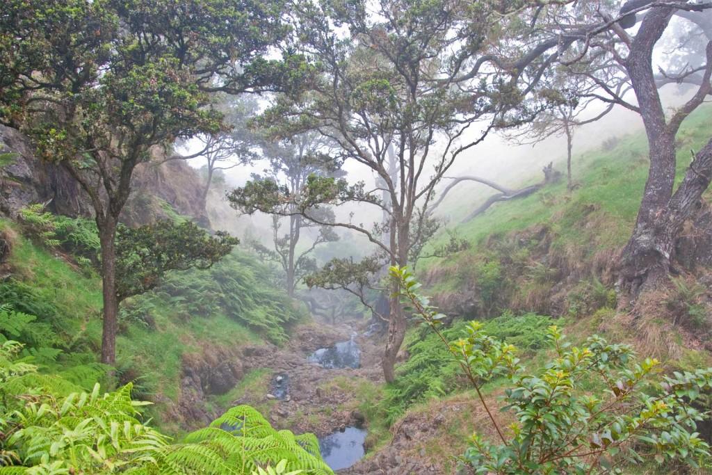 Nakula Natural Area Reserve