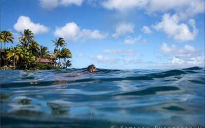 Honu Hello, Maui