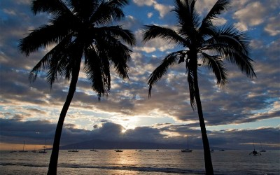 Lahaina Palms