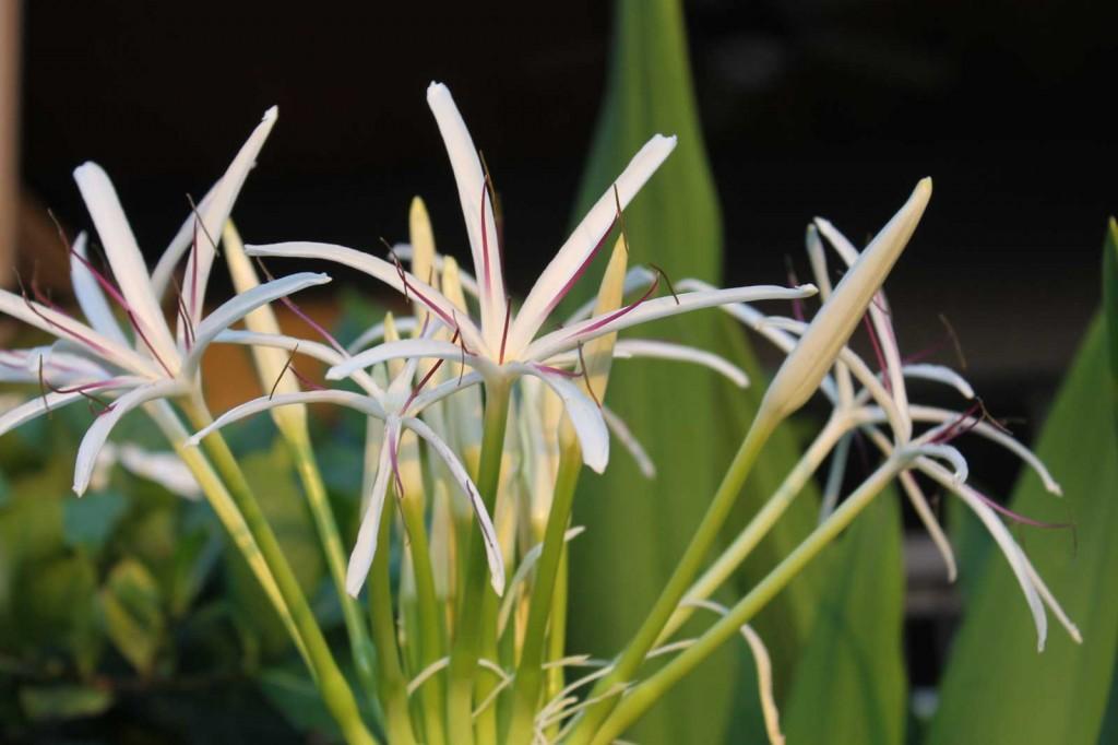 Fine petals hawaii pictures fine petals mightylinksfo Gallery