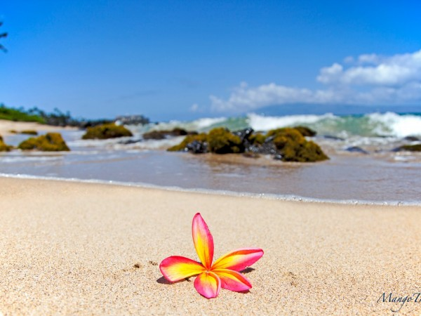 beach-plumeria