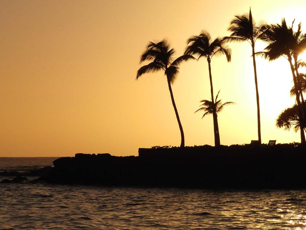 Kona Golden Palms