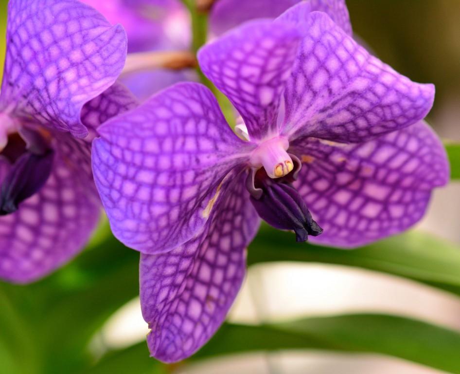 Purple Flower in Hawaii