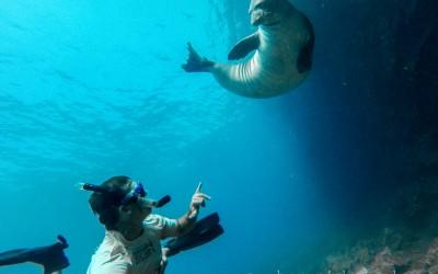 Monk Seal Snorkeling