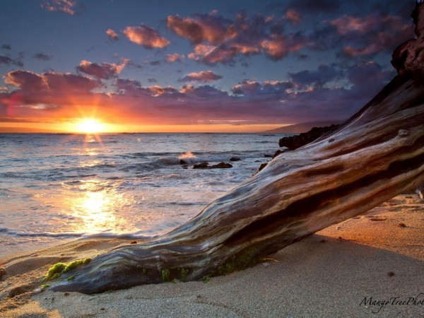 Hawaii Beach Sunset with Log