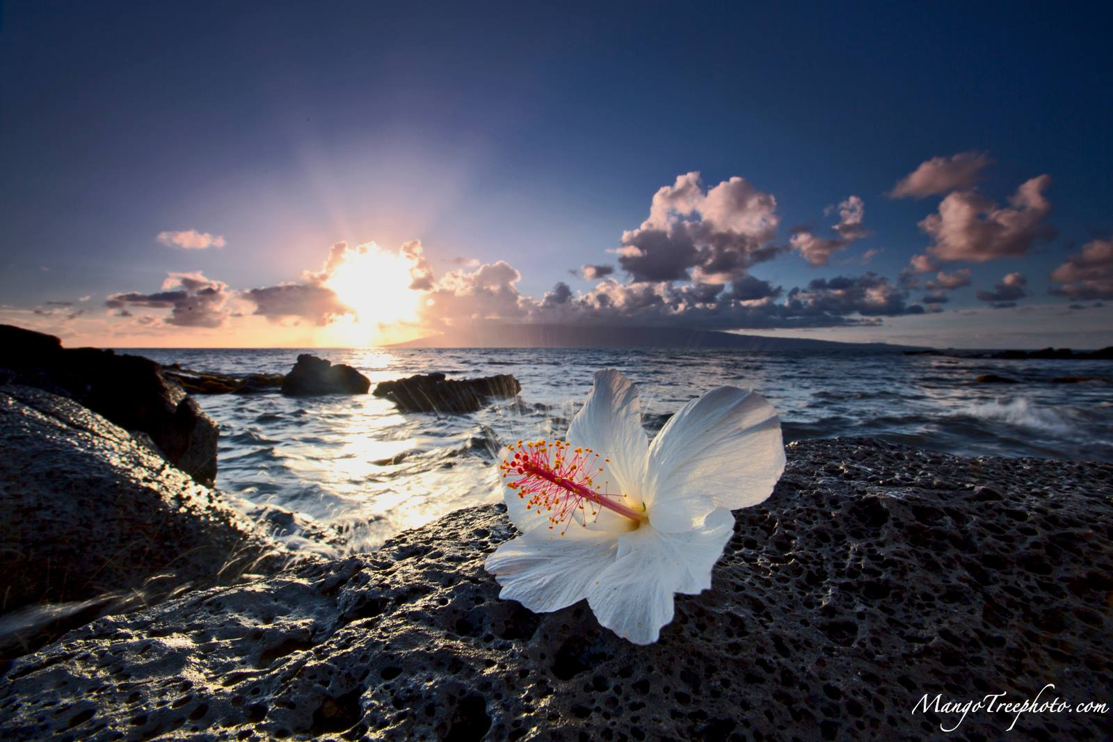 Hibiscus On The Rocks  Hawaii Pictures