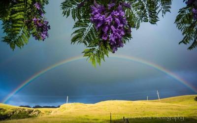 Upcountry Maui Rainbow