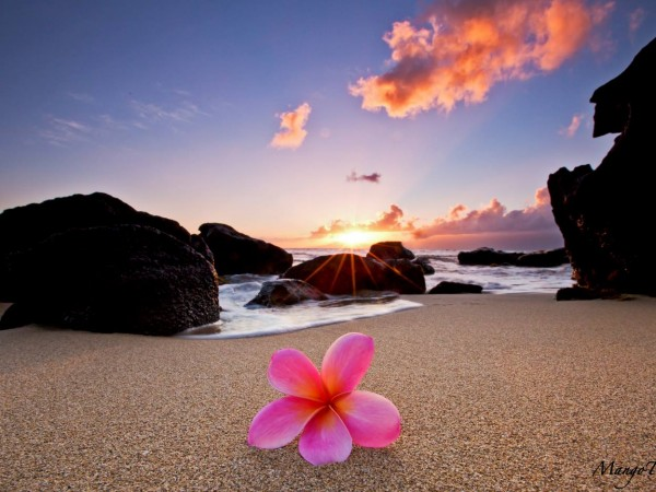 Plumeria by the Sea